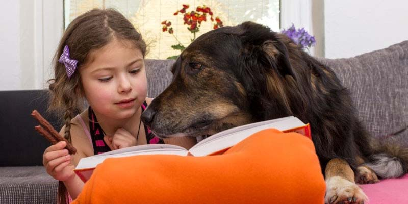 The Positive Impact Reading Dogs Have on Education and Literacy